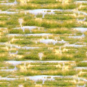 Golden Green Grass/Water